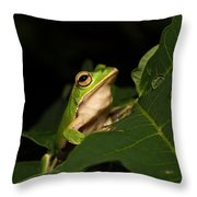 Emerald Eye Tree Frog Throw Pillow