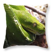 Emerald Tree Boa Throw Pillow