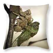Emerging - Cicada 2 Throw Pillow