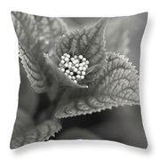 Emerging Hydrangea Throw Pillow