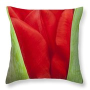 Emerging Red Tulip Throw Pillow