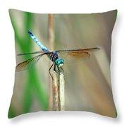Emperor Dragonfly  Throw Pillow