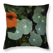 Empress Of India Nasturtium Throw Pillow