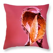 Empty Seed Pod  Throw Pillow