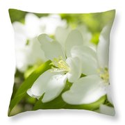 Encyclopedia Of Spring Image Apple Blossom  Throw Pillow
