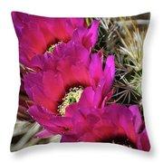 Engleman's Hedgehog Cactus  Throw Pillow