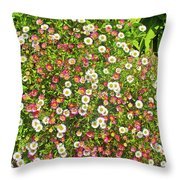 English Daisies At Pelican Inn Near Muir Woods National Monument, California Throw Pillow