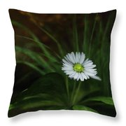 English Daisy Throw Pillow