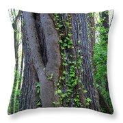 English Ivy Elder Throw Pillow