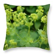 English Ladys Mantle Throw Pillow