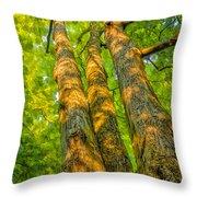 Enlightened Trees Throw Pillow