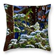 Enlightened Winter Throw Pillow