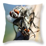 Entomologists Discover Why People Want To Be A Fly On The Wall Throw Pillow