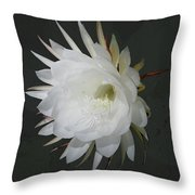 Epiphyte Blossom - Epiphyllum Oxypetalum Throw Pillow