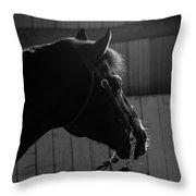 Equine Smile Throw Pillow