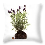 Essential Oil Of Spanish Lavender Throw Pillow