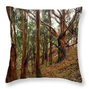 Eucalyptus Grove In California Throw Pillow by Ben Upham III