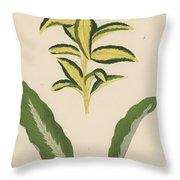 Euonymus Japonica Aurea Variegata, Maranta Micans Throw Pillow