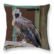 Eurasian Black Vulture 1 Throw Pillow