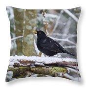 Eurasian Blackbird In The Snow Throw Pillow
