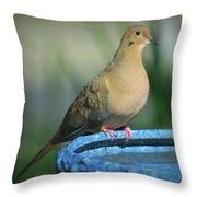Mourning Dove On Birdbath Throw Pillow