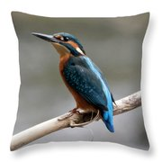 Eurasian Kingfisher Throw Pillow