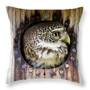 Eurasian Pygmy Owl In Profile Throw Pillow