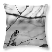 European Goldfinch 1 Throw Pillow