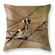 European Goldfinch 5 Throw Pillow