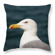 European Herring Gull Portrait Throw Pillow