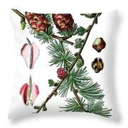 European Larch, Pinus Larix Throw Pillow