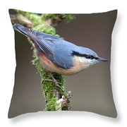 European Nuthatch Throw Pillow