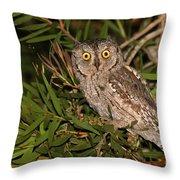European Scops Owl  Throw Pillow