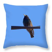 European Starling Trasparent Background Throw Pillow