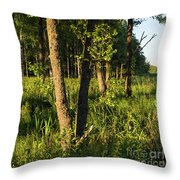 Evening In The Sunshine Throw Pillow