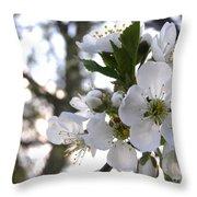 Evening Show - Cherry Blossoms Throw Pillow