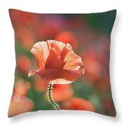 Evening Sun Illumination Throw Pillow