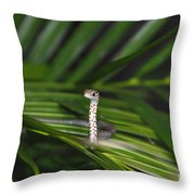 Everglades Racer Throw Pillow