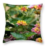 Evita Rose Lantana Throw Pillow