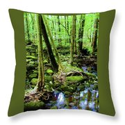 Evolution Of A Forest In Spring  Throw Pillow