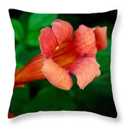 Evolution Of The Trumpet Flower II Throw Pillow