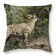 Ewe 1 Throw Pillow