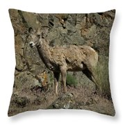 Ewe 2 Throw Pillow