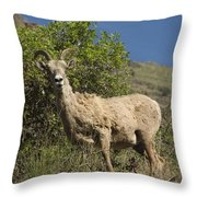 Ewe 3 Throw Pillow