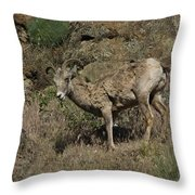 Ewe 5 Throw Pillow