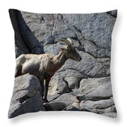 Ewe Bighorn Sheep Throw Pillow