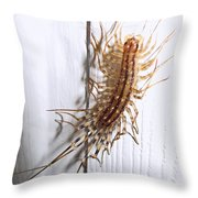 Ewwweeeeee Throw Pillow