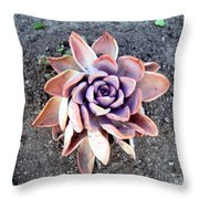Exotic Succulent Plant - Pink Lilac Throw Pillow