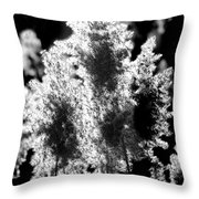 Exploded Cat Tails Throw Pillow