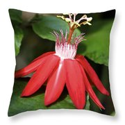 Exploding Red Flower Throw Pillow
